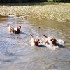 photo chien et chiot dogue de bordeaux : 2005pic02