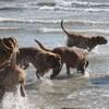 photo chien et chiot dogue de bordeaux : 2006ete02