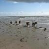 photo chien et chiot dogue de bordeaux : 2006ete03