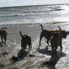photo chien et chiot dogue de bordeaux : 2006ete04