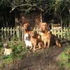 photo chien et chiot dogue de bordeaux : 2007janvier01