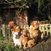 photo chien et chiot dogue de bordeaux : 2007janvier03