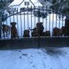 photo chien et chiot dogue de bordeaux : 20101217_dogues_neige_02