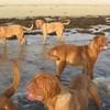 photo chien et chiot dogue de bordeaux : 2010_ete_balade_mer_01