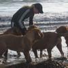 photo chien et chiot dogue de bordeaux : 2010_ete_balade_mer_02