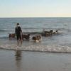 photo chien et chiot dogue de bordeaux : 2010_ete_balade_mer_03