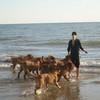 photo chien et chiot dogue de bordeaux : 2010_ete_balade_mer_04