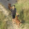 photo chien et chiot dogue de bordeaux : 2010_ete_balade_mer_06
