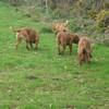photo chien et chiot dogue de bordeaux : 20110311_nos_dogues_03
