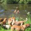 photo chien et chiot dogue de bordeaux : 20110521_nos_dogues_01