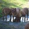 photo chien et chiot dogue de bordeaux : 2011_octobre_ete_009