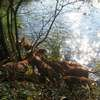 photo chien et chiot dogue de bordeaux : 2011_octobre_ete_010