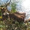 photo chien et chiot dogue de bordeaux : 2011_octobre_ete_011