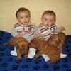 photo chien et chiot dogue de bordeaux : 20121021_jumeaux_et_chiots01