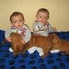 photo chien et chiot dogue de bordeaux : 20121021_jumeaux_et_chiots02
