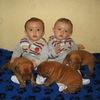 photo chien et chiot dogue de bordeaux : 20121021_jumeaux_et_chiots03