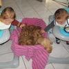 photo chien et chiot dogue de bordeaux : 20121130_jumeaux_et_chiots04