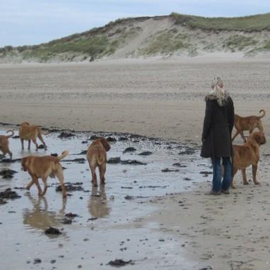 photo chien et chiot dogue de bordeaux : 20121208_chiens_mer_05