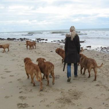 photo chien et chiot dogue de bordeaux : 20121208_chiens_mer_06