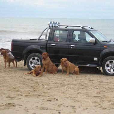 photo chien et chiot dogue de bordeaux : 20121208_chiens_mer_08