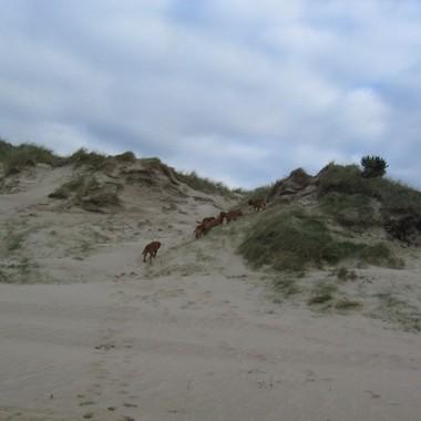 photo chien et chiot dogue de bordeaux : 20121208_chiens_mer_09