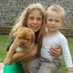 photo chien et chiot dogue de bordeaux : 20130701_chiens_enfants_01