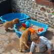 photo chien et chiot dogue de bordeaux : 20130701_chiens_enfants_03