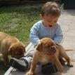 photo chien et chiot dogue de bordeaux : 20130701_chiens_enfants_04