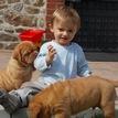 photo chien et chiot dogue de bordeaux : 20130701_chiens_enfants_05