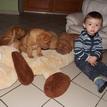 photo chien et chiot dogue de bordeaux : 20131112_03