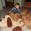 photo chien et chiot dogue de bordeaux : 20131112_04