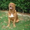 photo chien et chiot dogue de bordeaux : Titanejuillet