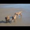 photo chien et chiot dogue de bordeaux : img00812