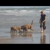 photo chien et chiot dogue de bordeaux : img00813