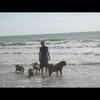 photo chien et chiot dogue de bordeaux : img00814