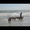 photo chien et chiot dogue de bordeaux : img00815