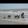 photo chien et chiot dogue de bordeaux : img00816