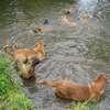 photo chien et chiot dogue de bordeaux : juin09_vacances01