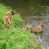 photo chien et chiot dogue de bordeaux : juin09_vacances02
