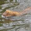 photo chien et chiot dogue de bordeaux : juin09_vacances03