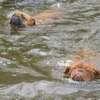 photo chien et chiot dogue de bordeaux : juin09_vacances06