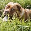 photo chien et chiot dogue de bordeaux : mai0401