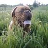 photo chien et chiot dogue de bordeaux : mai0403