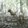 photo chien et chiot dogue de bordeaux : ouviventnosdogues02