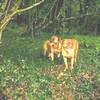 photo chien et chiot dogue de bordeaux : ouviventnosdogues08