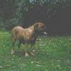 photo chien et chiot dogue de bordeaux : ouviventnosdogues10