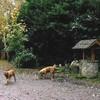 photo chien et chiot dogue de bordeaux : ouviventnosdogues11