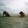 photo chien et chiot dogue de bordeaux : plageautruche
