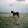 photo chien et chiot dogue de bordeaux : plagefier