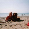 photo chien et chiot dogue de bordeaux : playasept2003
